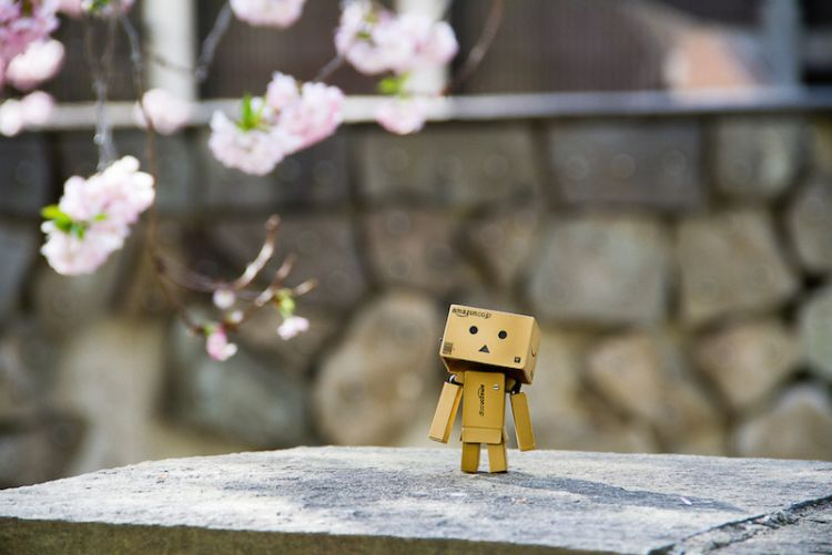 danbo adventure