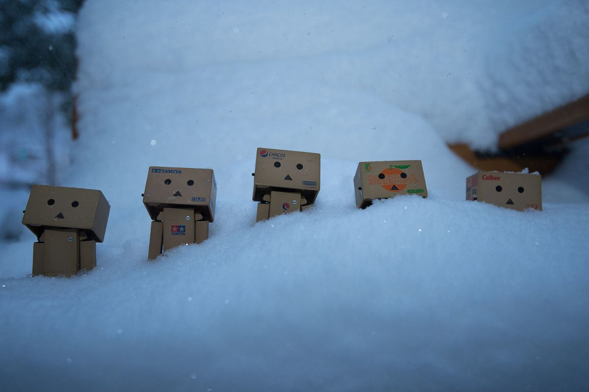 5 danbos lie in the snow in a line
