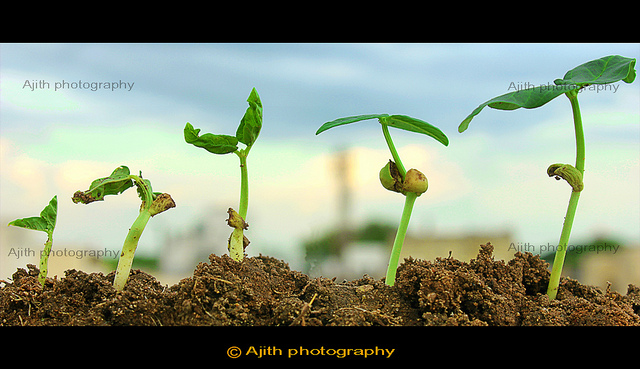Plant Growth Stages